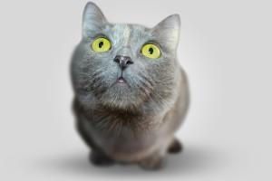 cat-351926_1920