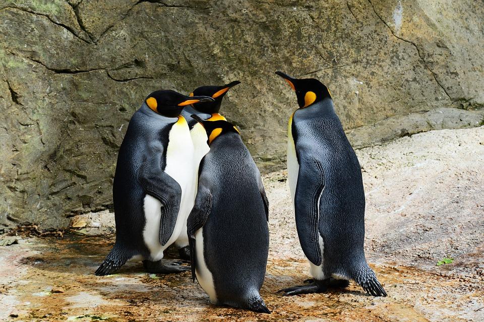Pingwin 4.0