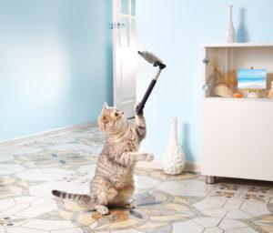ochrona danych osobowych kotów by GIODO
