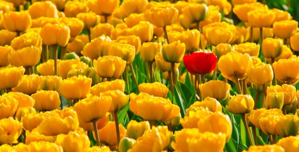 wiosna w reklamie wideo