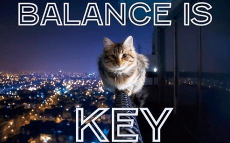 równowaga kocia